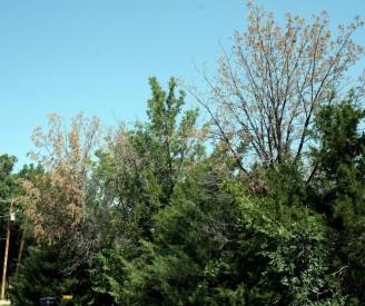 Tree die off