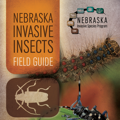Invasive Insects Field Guide