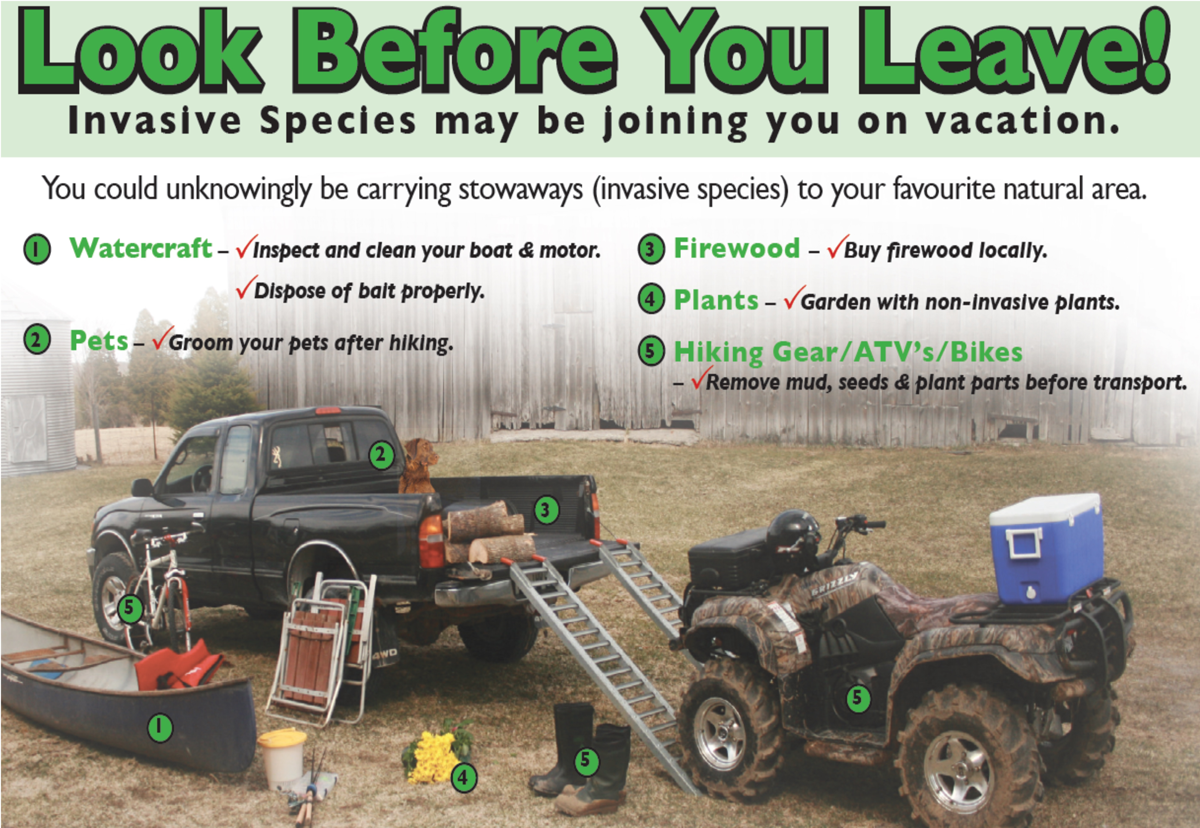 Graphic of places invasive species could come with you on your vacation