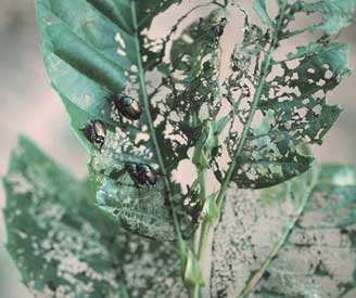 Damage to Leaves