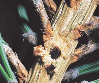 Damage to tree branch