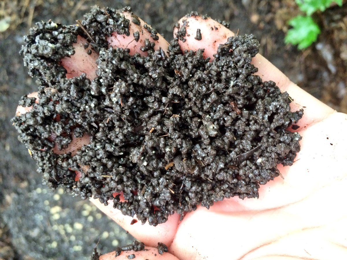 Soil is dry after jumping worms have consumed it