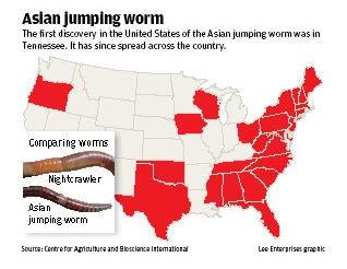 Asian Jumping Worm | Invasive Species Program | Nebraska