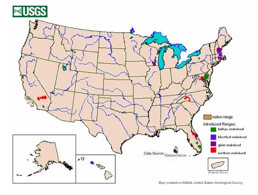Snakehead invasive species program nebraska for Snakehead fish invasive species
